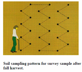 Soil sampling pattern for survey sample after fall harvest.