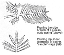 Pruning Pointers