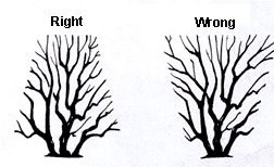 Right and wrong way to prune