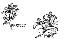 herbs coloring pages - photo#13